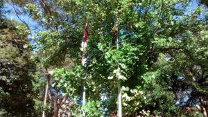 Plaza Uruguay Trees